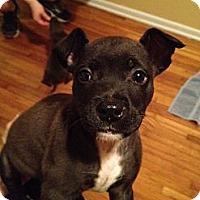 Adopt A Pet :: Samo - Orlando, FL
