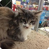 Adopt A Pet :: Sarah - Tracy, CA
