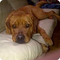 Adopt A Pet :: BillyAnn - Cornwall, ON