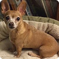 Adopt A Pet :: Paco - Homewood, AL