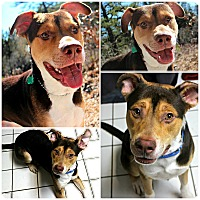 Adopt A Pet :: Thor - Forked River, NJ