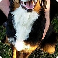 Adopt A Pet :: Josie - Woodstock, ON