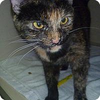 Adopt A Pet :: Rolo - Hamburg, NY
