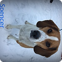 Adopt A Pet :: Spencer - Muskegon, MI