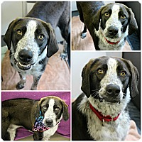Adopt A Pet :: Rolo - Forked River, NJ