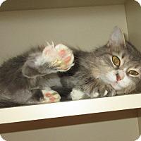 Adopt A Pet :: Raven - Elizabeth City, NC