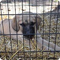 Adopt A Pet :: Jolean - E. Greenwhich, RI