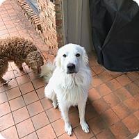 Adopt A Pet :: Leo - oklahoma city, OK