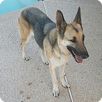Adopt A Pet :: GRACIE - Peoria, AZ