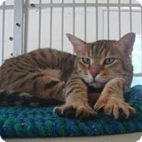 Adopt A Pet :: Mei Lei - Winter Haven, FL