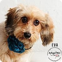 Adopt A Pet :: Eva - Omaha, NE