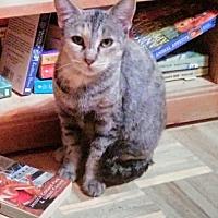 Adopt A Pet :: Violet, Countess of Grantham - Glendale, AZ