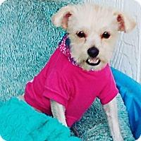 Adopt A Pet :: Xena - Covina, CA