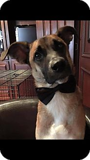 German Shepherd Dog Mix Dog for adoption in Austin, Texas - Tex