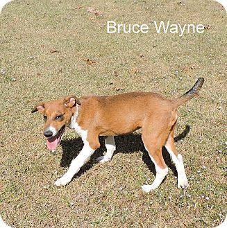 Terrier (Unknown Type, Medium) Mix Puppy for adoption in Slidell, Louisiana - Bruce Wayne