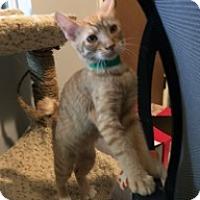 Adopt A Pet :: Stubbs - Mission Viejo, CA