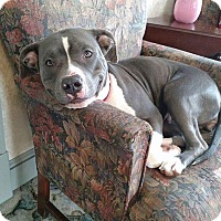 Adopt A Pet :: Shayla - Sharon Center, OH