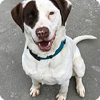 Adopt A Pet :: Guy - The Dalles, OR