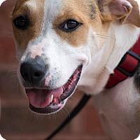 Adopt A Pet :: NatalieCole - Alpharetta, GA