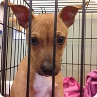 Adopt A Pet :: Spike - Clay, NY