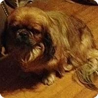 Adopt A Pet :: Willie - Vansant, VA