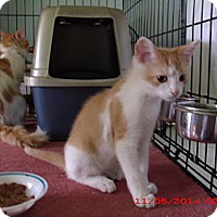 Adopt A Pet :: Lucas - Acme, PA