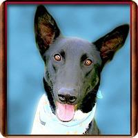Adopt A Pet :: Barrett handsome - Sacramento, CA