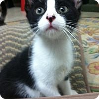 Adopt A Pet :: Popcorn - Trevose, PA