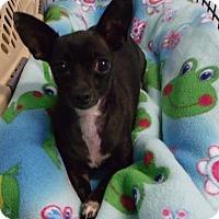 Adopt A Pet :: Onyx - Muskegon, MI