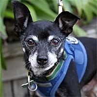 Adopt A Pet :: JoJo - Pacific Grove, CA