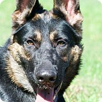 Adopt A Pet :: Ginger - Wayland, MA