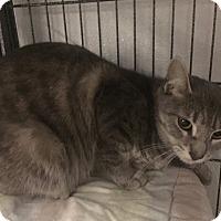 Adopt A Pet :: Nikki - Forest Hills, NY