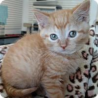 Adopt A Pet :: Hopper - DFW Metroplex, TX