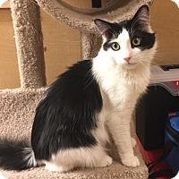 Adopt A Pet :: Luke - Winchester, CA
