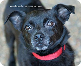 Chihuahua/Pug Mix Dog for adoption in Atlanta, Georgia - May