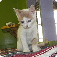 Adopt A Pet :: Queso - Dover, OH