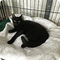 Adopt A Pet :: Palmer - Speonk, NY