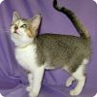 Adopt A Pet :: Darma - Powell, OH