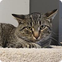 Adopt A Pet :: Jingle - Naperville, IL