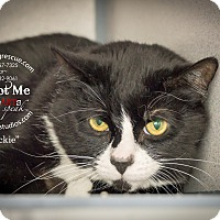 Adopt A Pet :: Blackie - Gardnerville, NV