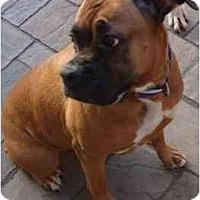 Adopt A Pet :: Baby - Grafton, MA