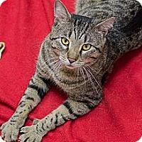 Adopt A Pet :: Jacques - Chicago, IL