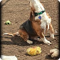 Adopt A Pet :: Rainier Hughes - Waldorf, MD
