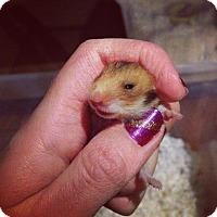 Adopt A Pet :: Squirt - Bensalem, PA