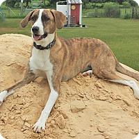 Adopt A Pet :: Sunflower - Orange Lake, FL