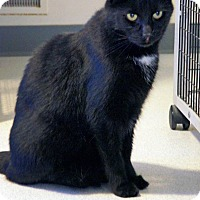 Adopt A Pet :: Don - Victor, NY