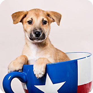 Shepherd (Unknown Type) Mix Puppy for adoption in Houston, Texas - Eureka