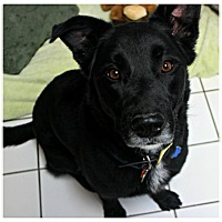Adopt A Pet :: Belvedere - Forked River, NJ