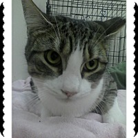 Adopt A Pet :: Kyle - Trevose, PA