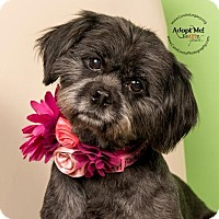Adopt A Pet :: Maggie - Cincinnati, OH